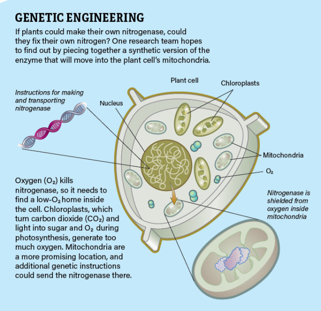 Genetic_Engineering_Infographic_Jay_Smith