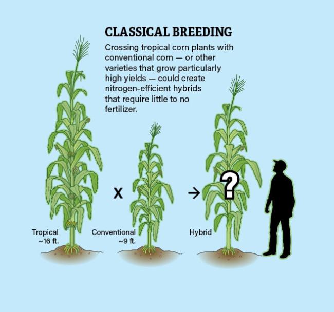 Traditional_Plant_Breeding_Infographic_Jay_Smit